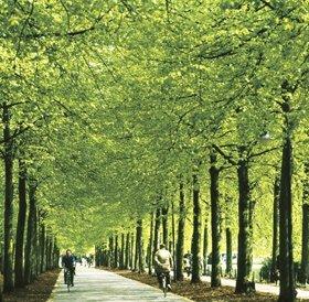 Promenade WWU